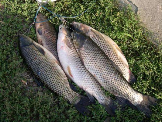 Пять рыб