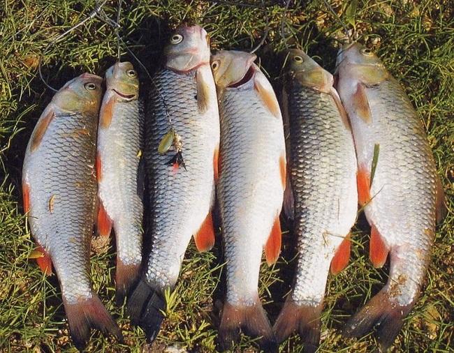 Шесть рыб