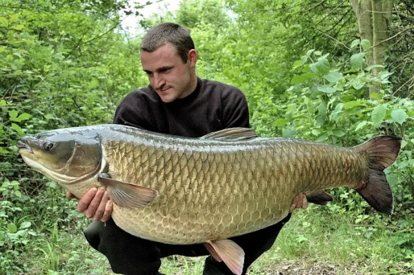 Рыбак и большой белый амур