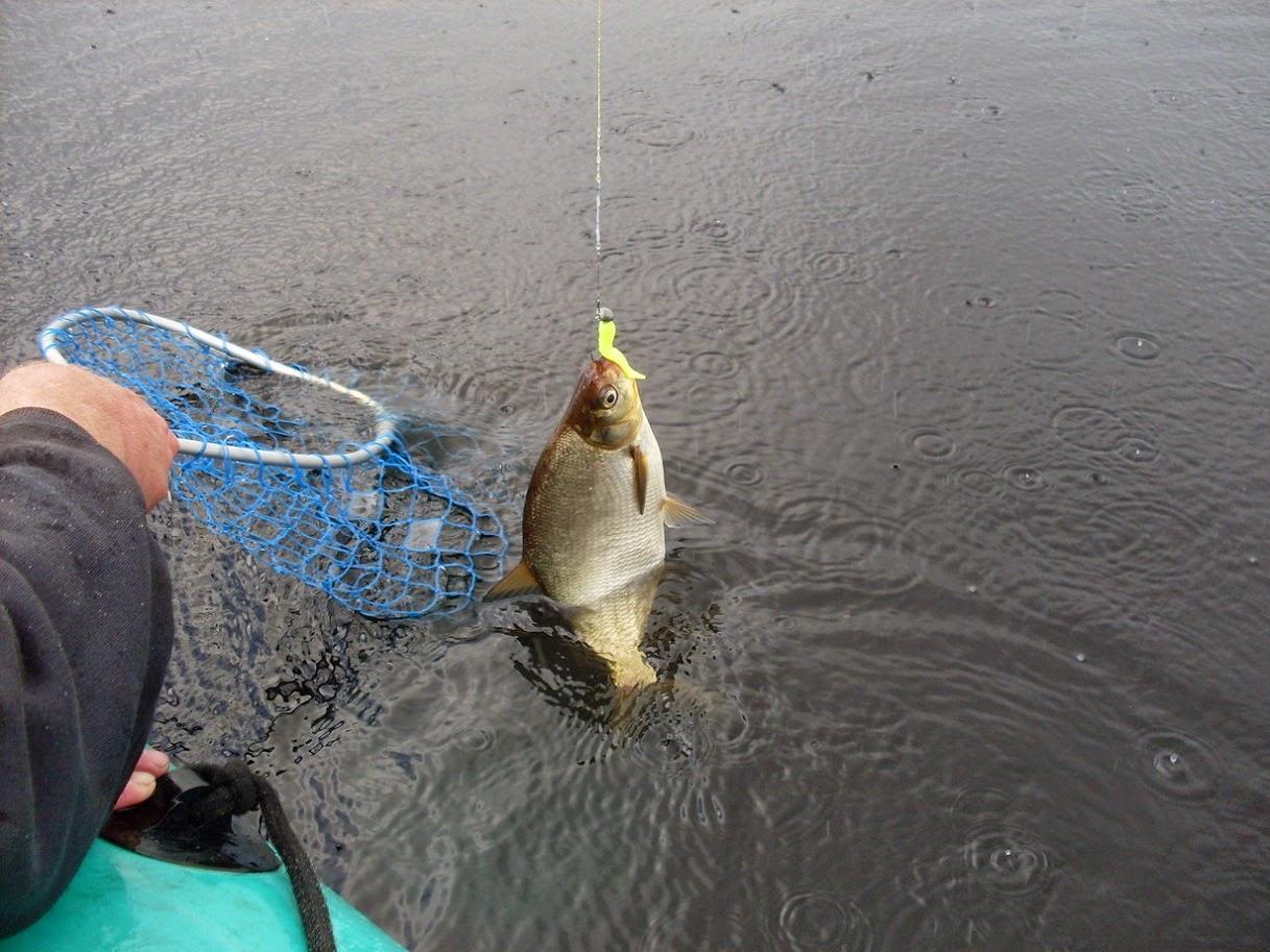 в сильный ветер рыба клюет в