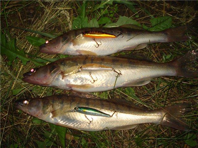 ловля судак ночью видео