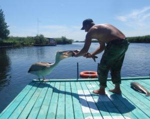 Рыбак кормит пеликана