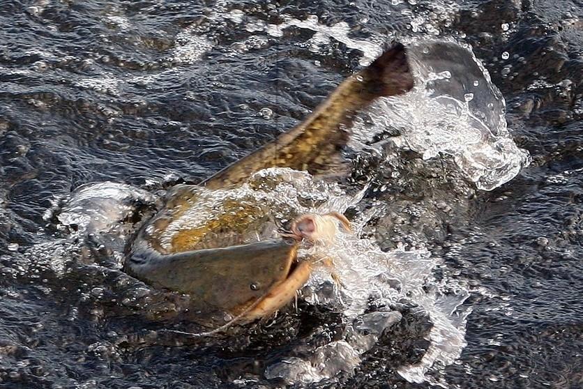 на что лучше ловить рыбу в каспийском море