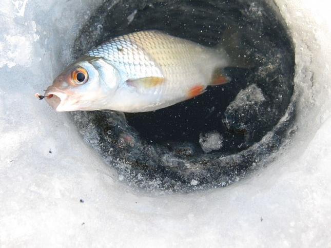Зимняя ловля из прорубая