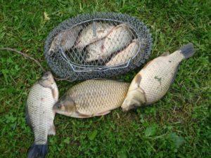 Рыба в садке