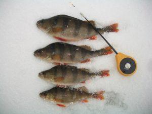 Четыре рыбы на снегу