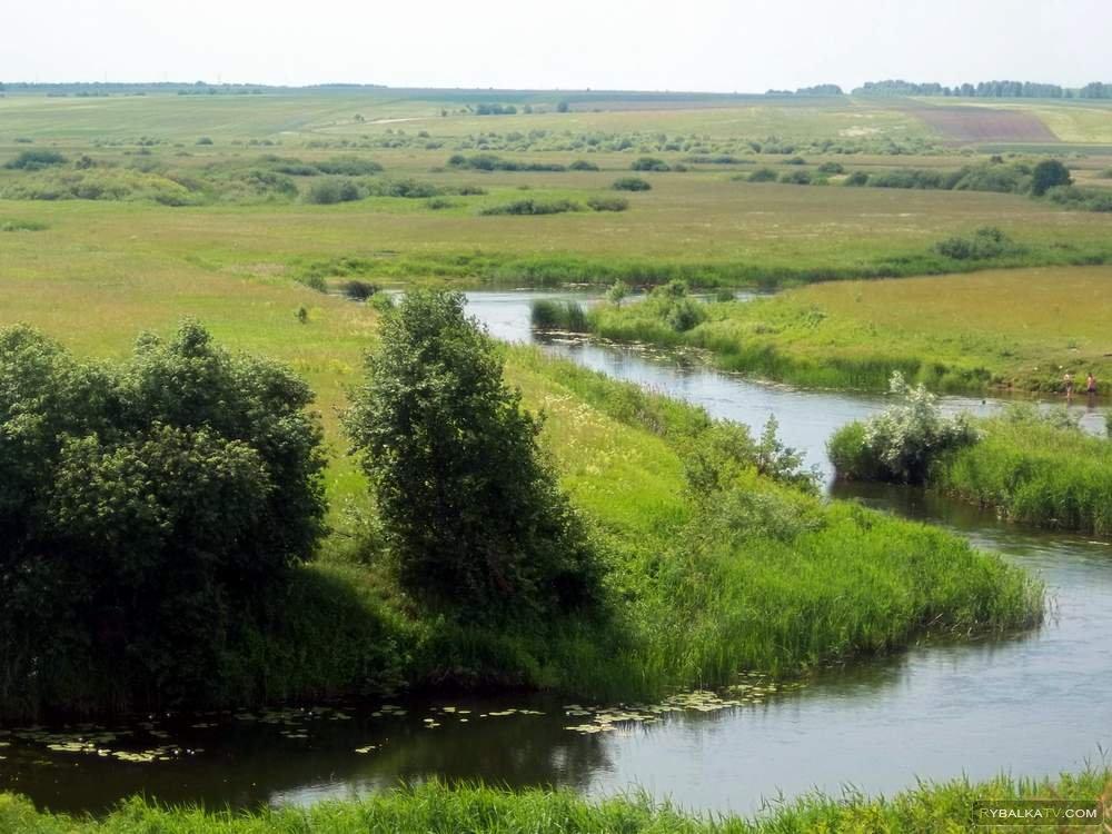 Трава вода деревья