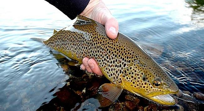 Очень красивая рыба в руке