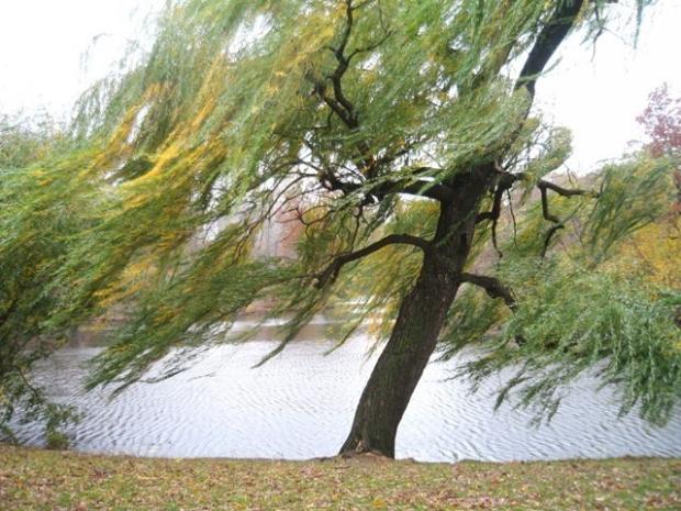 Ветер гнет деревья