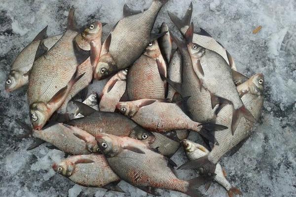 Большая куча рыбы