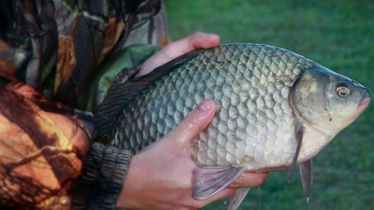 Огромная рыба в руках