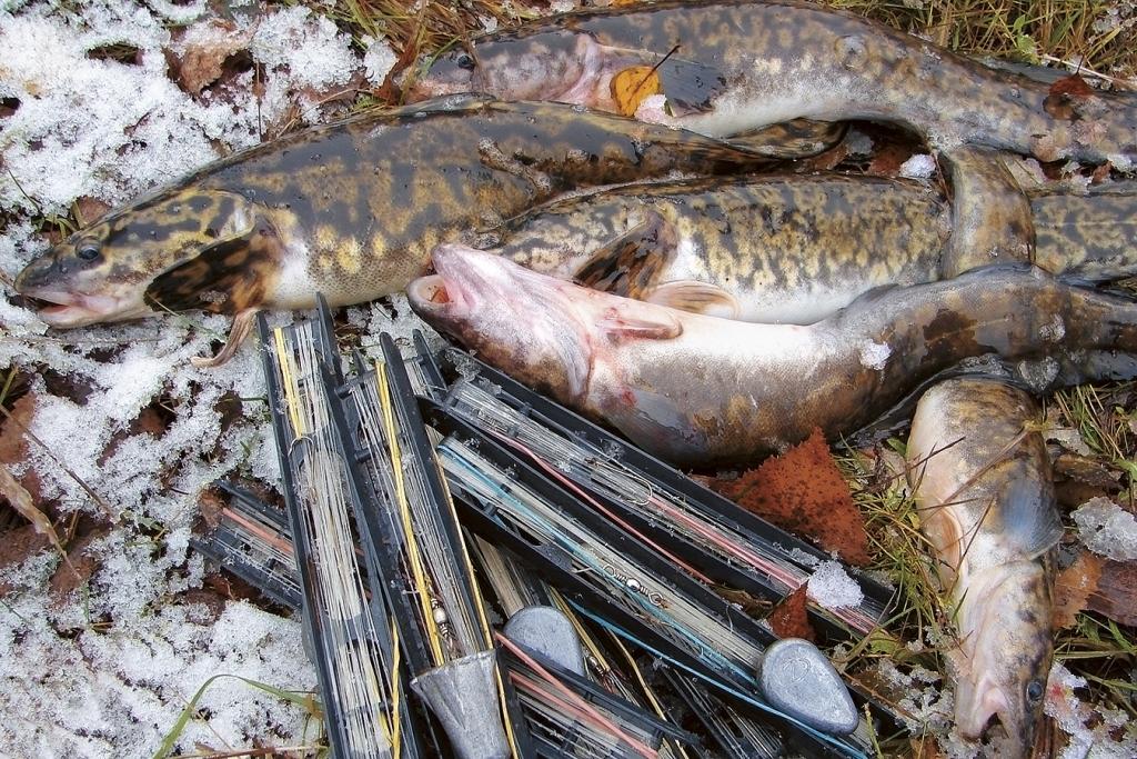 Куча рыбы и снастей