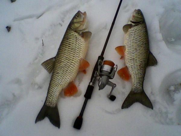 Две рыбы и удочка