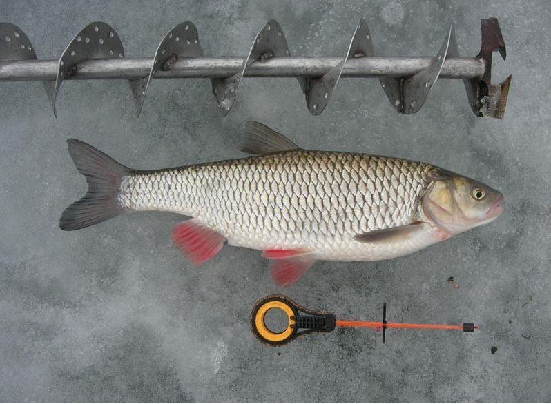 Бур рыба и удочка
