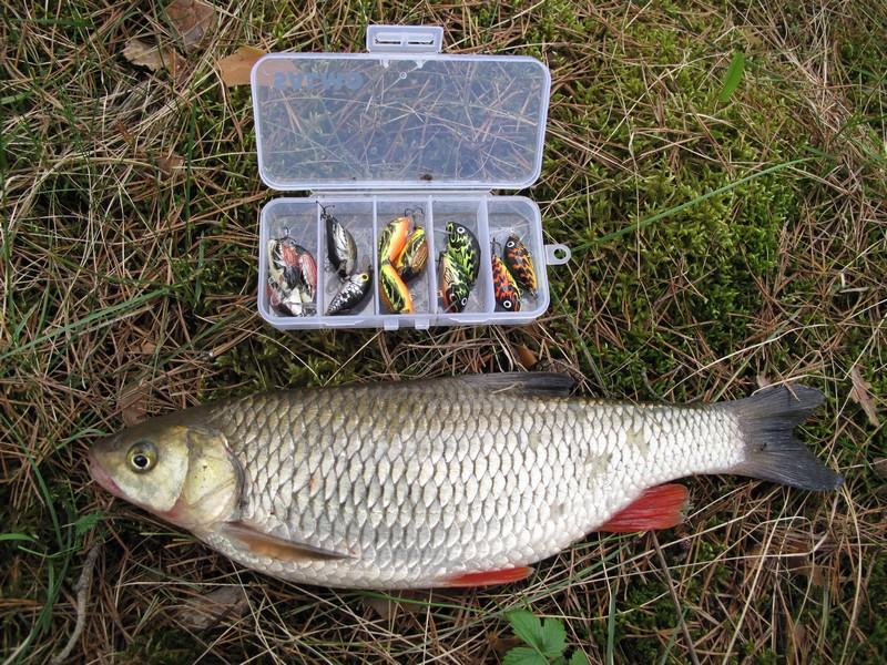 Рыба и насадки в коробке