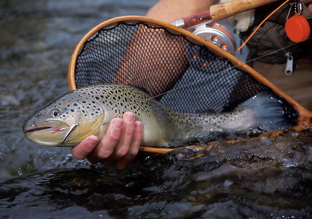 Красивая рыбка в руке