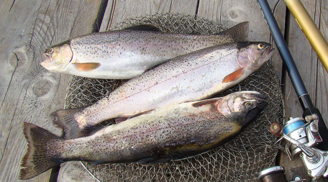 Три крупные рыбы