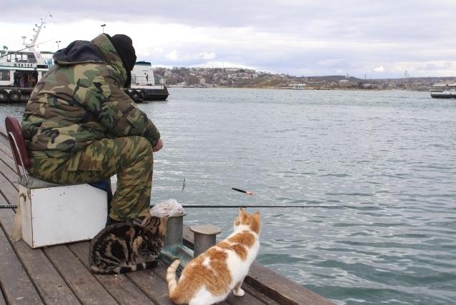 Рыбак и два кота
