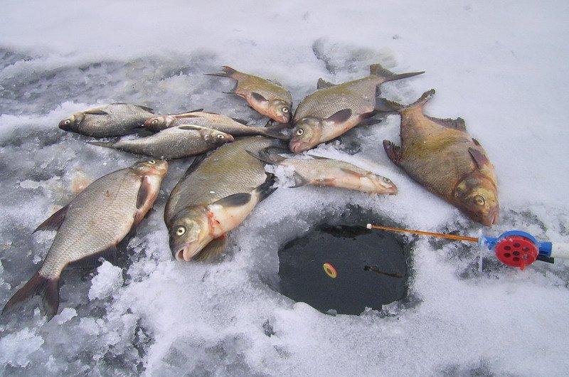 Прорубь и много рыбы
