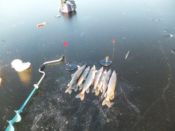 Рыба и снасти на льду