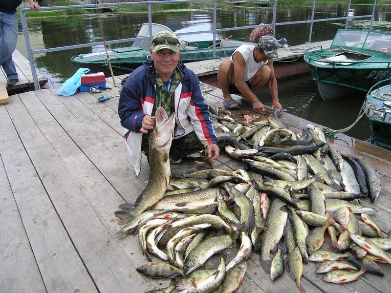 Два рыбака на пристани делят улов