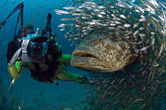 Дайвер с камерой и рыбами