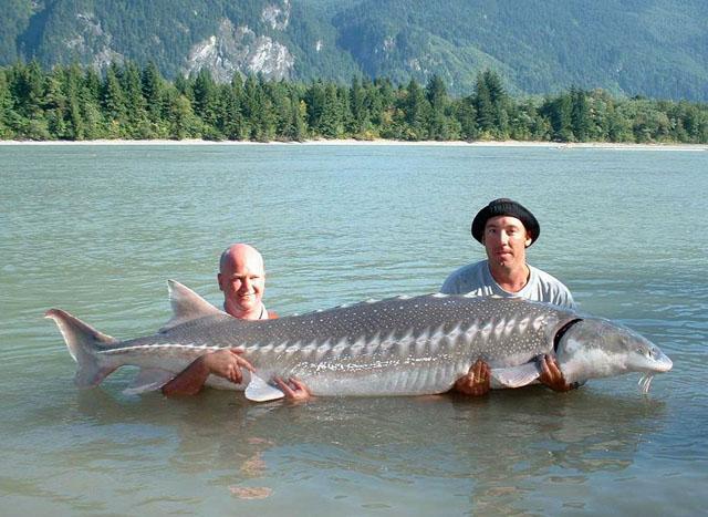 Рыбаки с огромным трафарет