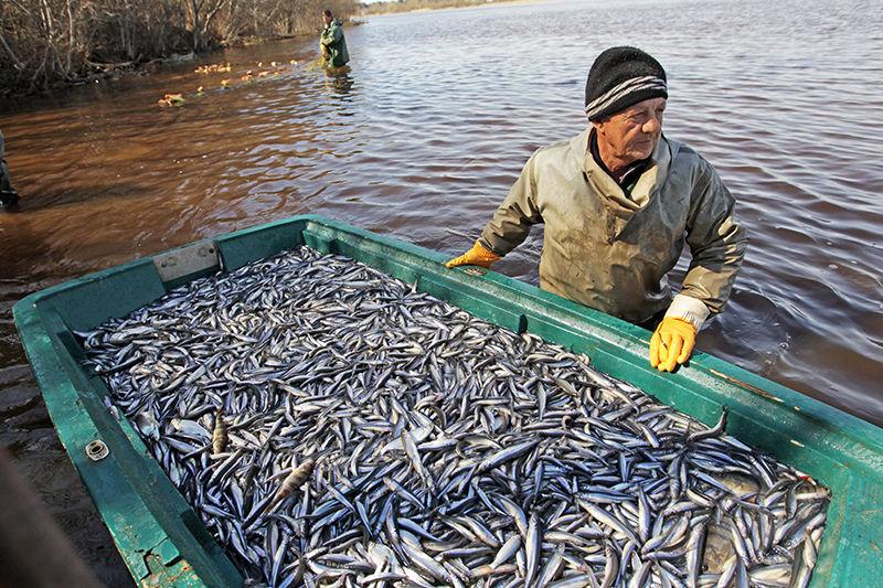 Полная лодка рыбы