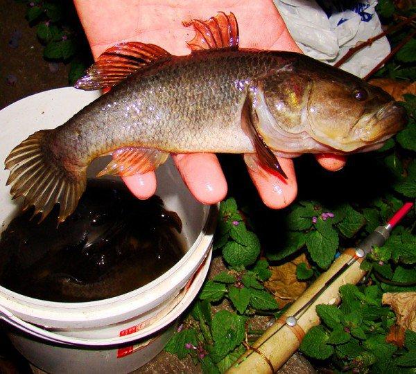 Рыба на ладони