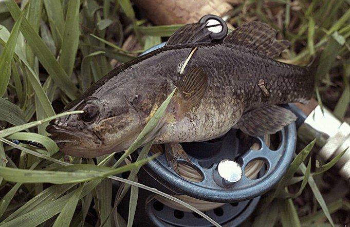Рыба на катушки