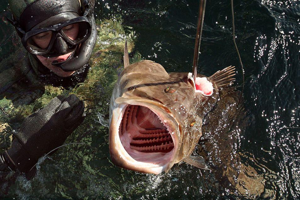 Подводный рыбак и пасть рыбы
