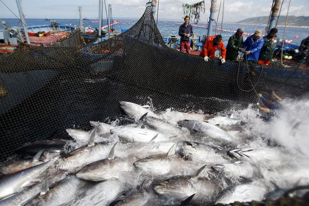 Полная сеть рыбы