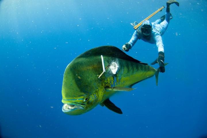 Дайвер с огромной рыбиной