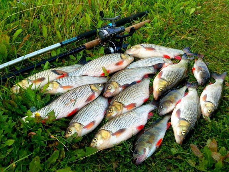 Спиннинг и куча рыбы