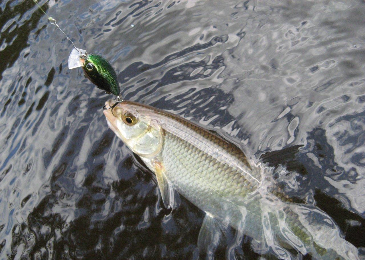 как клюет рыба в пасмурную погоду