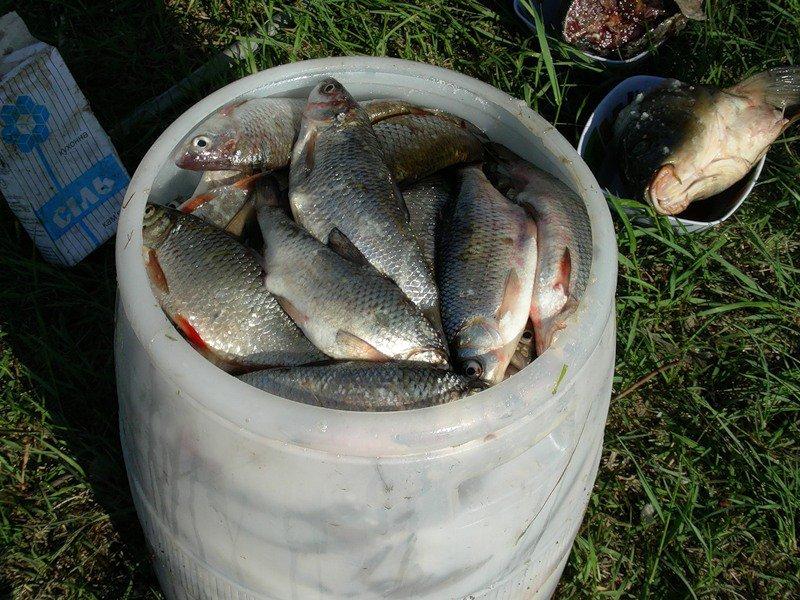 Рыба в бочке