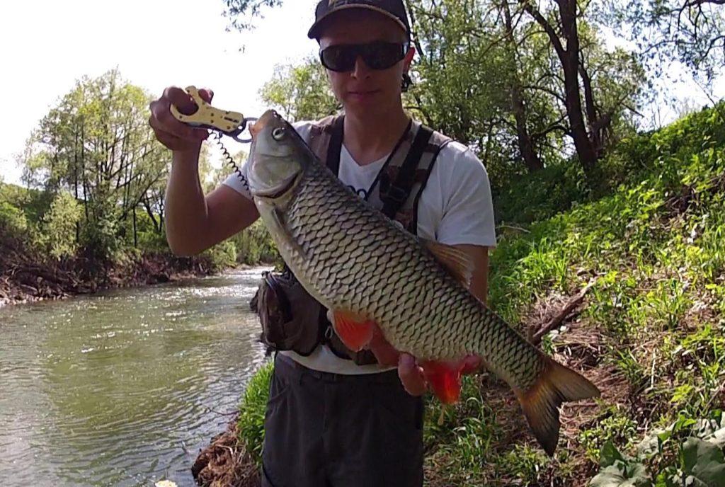 о рыбалке на головля