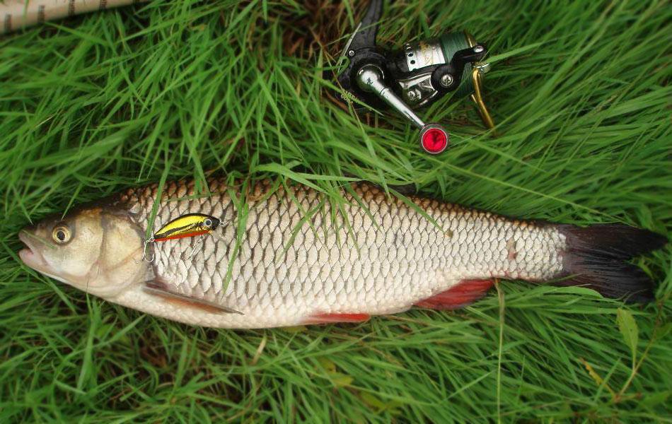 Рыбка на травке