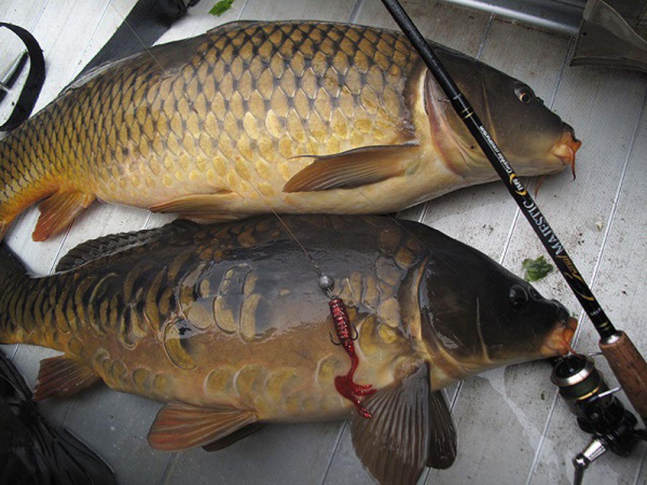 снасти для летней рыбалки на речке