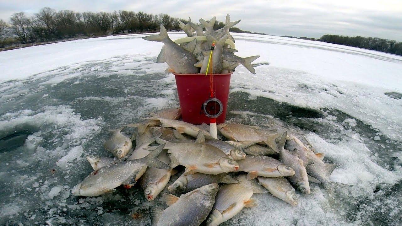 Куча замершей рыбы