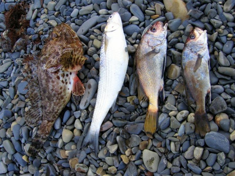 Четыре пойманных рыбы