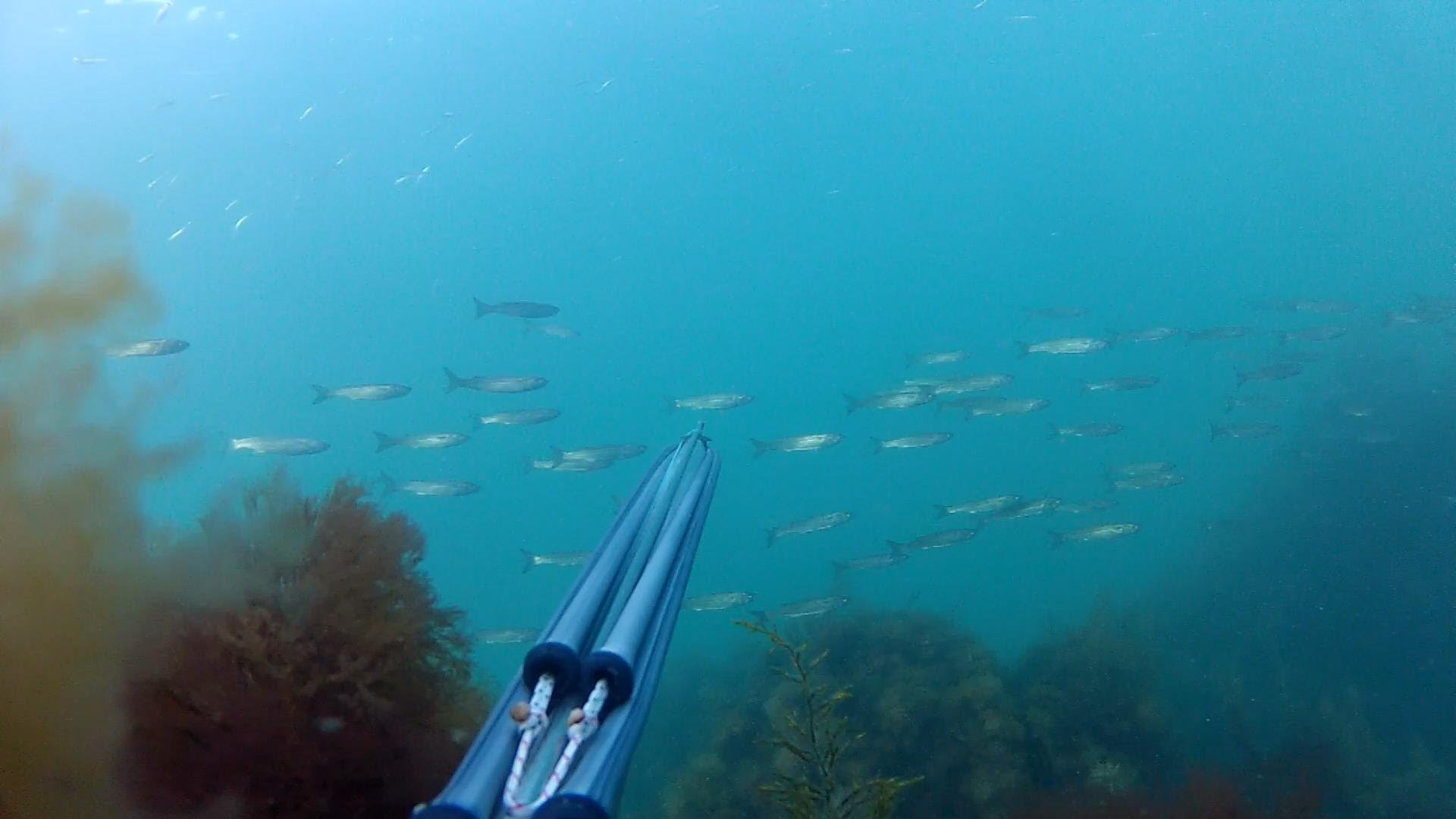 Подводное ружьё на фоне стаи рыб