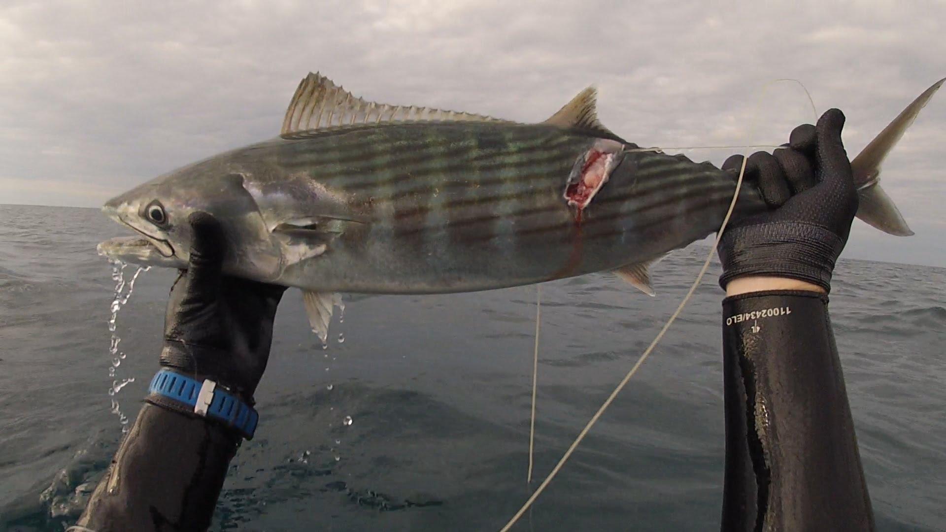 Добытая рыба в руках