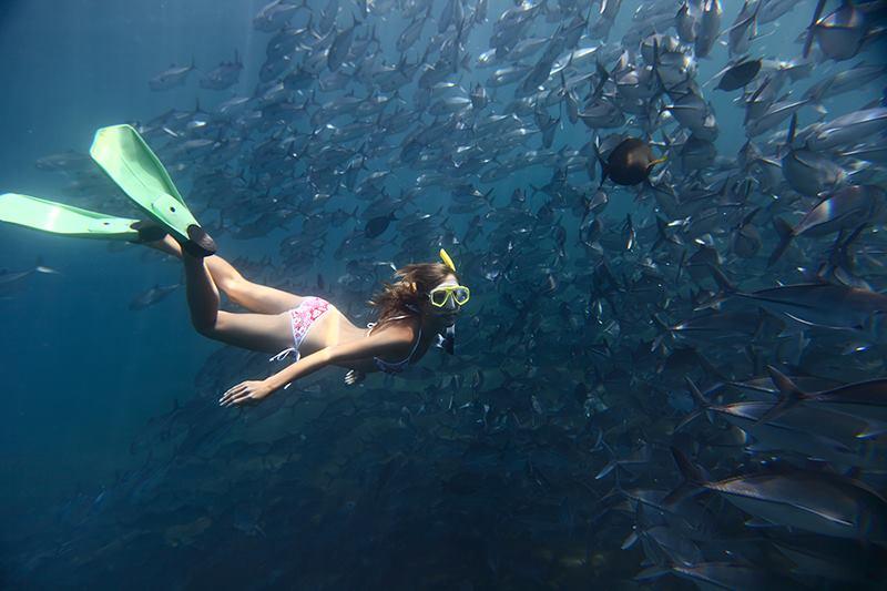 Девушка под водой в косяке рыб