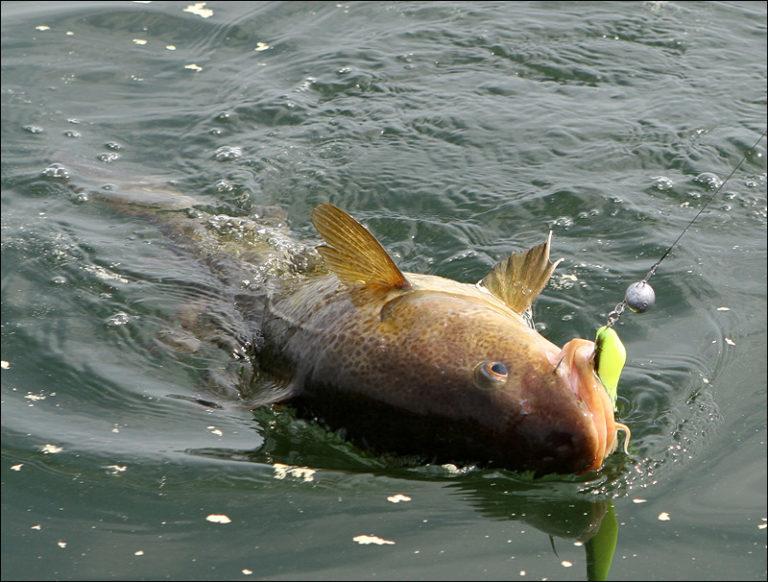 Что такое dip в рыбалке