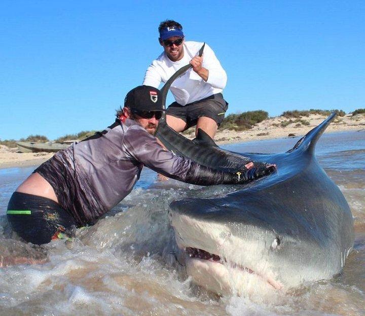 Два рыбака с пойманной акулой