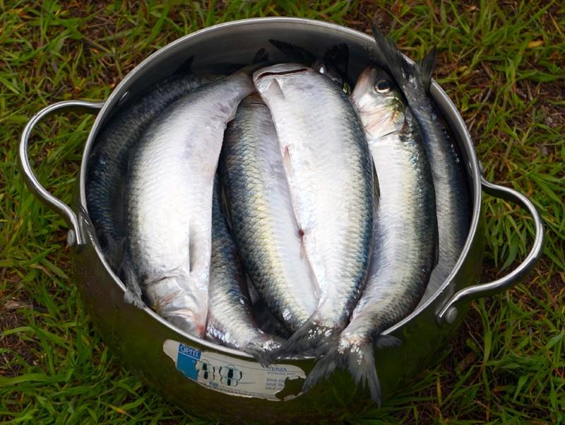 Полная кастрюля с рыбой