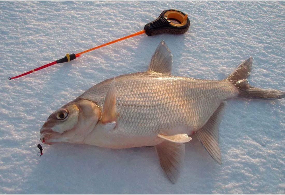 Рыба на льду с зимней удочкой