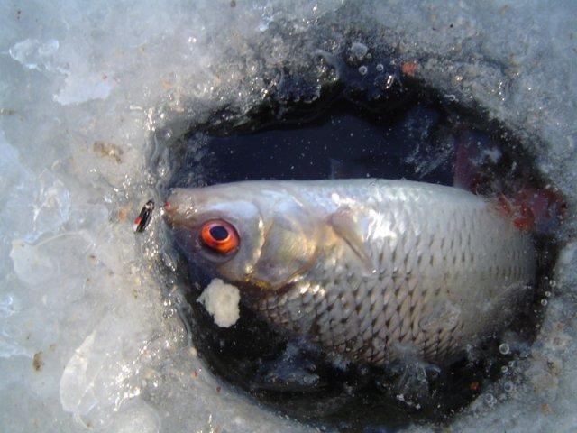 Рыбка в прорубе