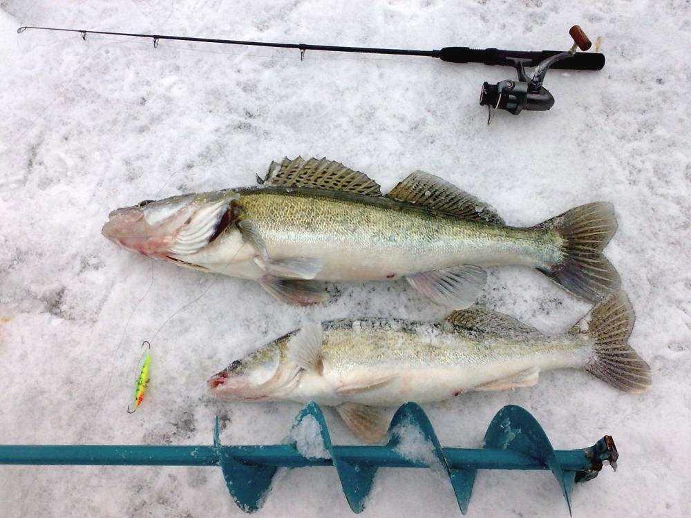 Пойманная рыба на снегу